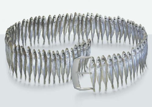 Fulvio Bonavia sardine belt